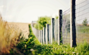 Wallpaper greens, grass, macro, flowers, background, widescreen, Wallpaper, the fence, blur, fence, spikelets, the fence, wallpaper, ...