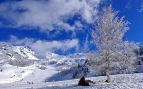 Picture the sky, clouds, snow, birch, ski descent