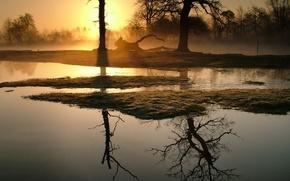 Wallpaper fog, morning, Trees