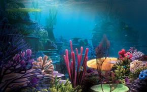 Picture the ocean, the bottom, corals