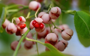 Picture macro, berries, branch, seeds, red, box