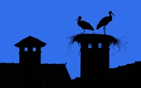 Wallpaper roof, the sky, the city, Wallpaper, silhouette, socket, stork, tile, fireplace, smoker