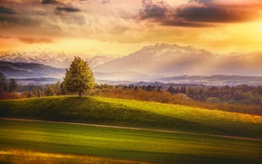 Picture forest, the sky, clouds, mountains, tree, treatment, Switzerland, Somewhere