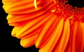 Wallpaper Petals, orange