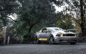 Picture road, forest, trees, the fence, Mustang, Ford, Mustang, silver, muscle car, Ford, the front part, ...