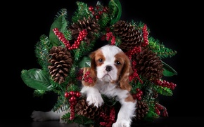 Picture spruce, puppy, wreath, bumps, The cavalier king Charles Spaniel