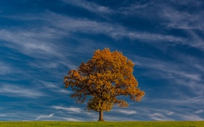 Picture field, autumn, the sky, clouds, tree