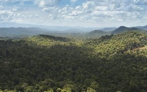 Picture forest, hills, jungle, New Guinea