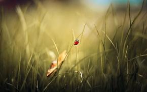 Picture nature, background, ladybug