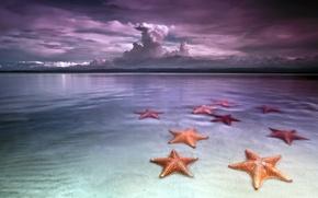 Wallpaper sea, starfish, the sky, shore, beach, clouds