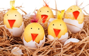 Picture eggs, socket, smile, smile, Easter, eggs, funny