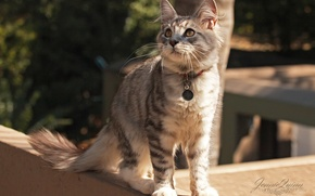 Picture cat, street, collar, attention