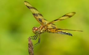 Picture dragonfly, wings, insect, nature