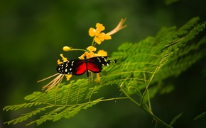 Picture flower, macro, butterfly, rostenie