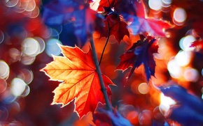 Picture beautiful, autumn, leaves, tree, branches, fall, foliage, maple