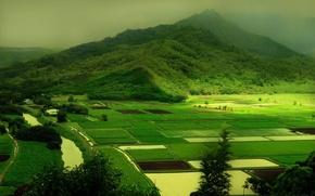 Wallpaper greens, nature, green, hills