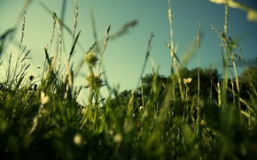 Picture macro, greens, field, nature, summer, grass, lawn