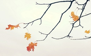 Picture leaves, branches, background