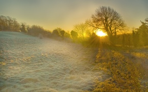 Wallpaper morning, rays, light, frost, England, trees, dawn, glade, the sun, grass
