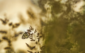 Picture nature, background, butterfly