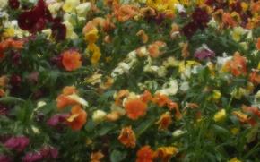 Wallpaper Rosa, figure, greens, flowers, drops
