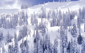 Picture slope, snow, Winter