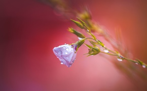 Picture flower, background, After rain