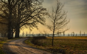 Picture road, field, trees, sunset, Autumn, road, trees, field, sunset, autumn, fall