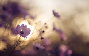 Picture light, flowers, nature
