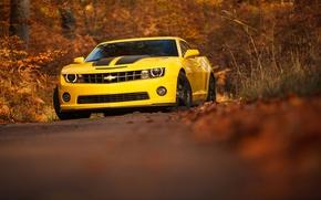 Picture camaro, chevrolet, yellow, autumn