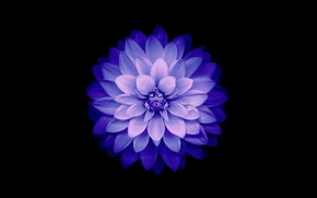 Wallpaper flower, petals, IOS 8, Blue, background