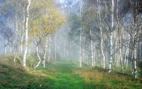 Picture Nature, Fog, Grass, Autumn, Trees, Forest, Birch