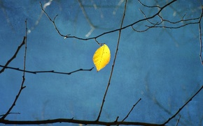 Picture branches, yellow, sheet, tree, blue background