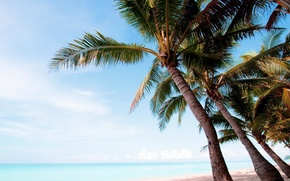 Picture beach, palm trees, the ocean, exotic