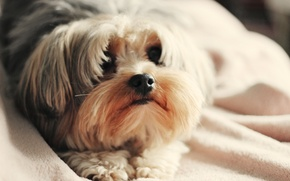 Picture dogs, face, background, Wallpaper, dog, dog, wallpapers