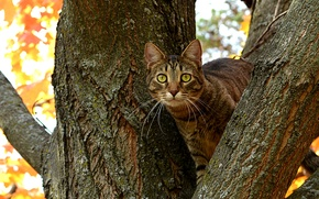 Picture cat, tree, branch, trunk, Kote, eyes