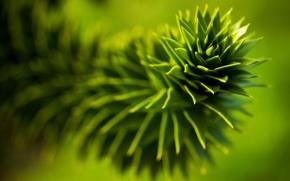 Wallpaper leaves, plant