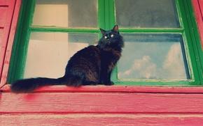 Picture cat, cat, look, Koshak, window, fluffy