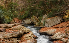 Picture autumn, forest, trees, river, stream, stones