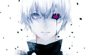 Picture Art, white hair, red eye, Ken Kanek, Tokyo ghoul, The Kaneko Ken, Tokyo ghoul
