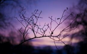 Picture macro, branches, nature, photo, background, branch, Wallpaper, the evening, twilight