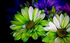 Picture paint, bouquet, petals, twilight