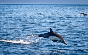 Picture sea, the sky, Dolphin, jump