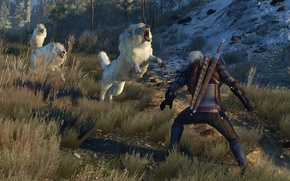 Picture Wolves, The Witcher, White, Wolf, Medieval, The Witcher 3, Wild Hunt, Geralt, Wolf Pack, White …