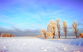Wallpaper winter, frost, field, the sky, clouds, snow, trees