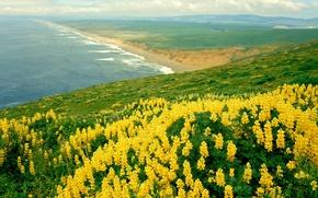 Wallpaper the ocean, nature, nature, california, landscape
