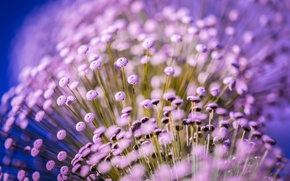 Picture macro, flowers, plant, small, lilac