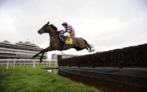 Wallpaper horse, jump, sport, rider