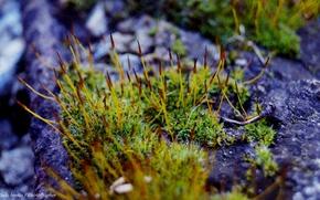 Picture nature, minimalism, Moss