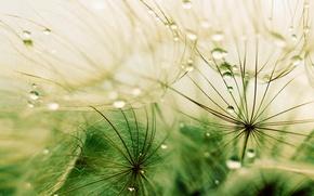 Picture grass, drops, macro, rain, grass, rain, macro, drops